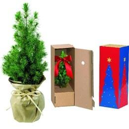 weihnachts b umchen natur ko werbeartikel. Black Bedroom Furniture Sets. Home Design Ideas
