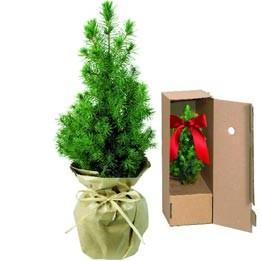 Weihnachts Bäumchen Natur