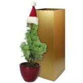 Weihnachtsbäumchen Santa Claus