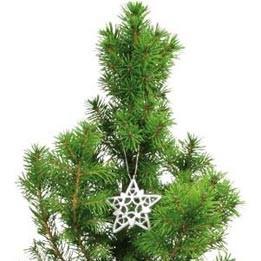 Weihnachtsbäumchen Stern